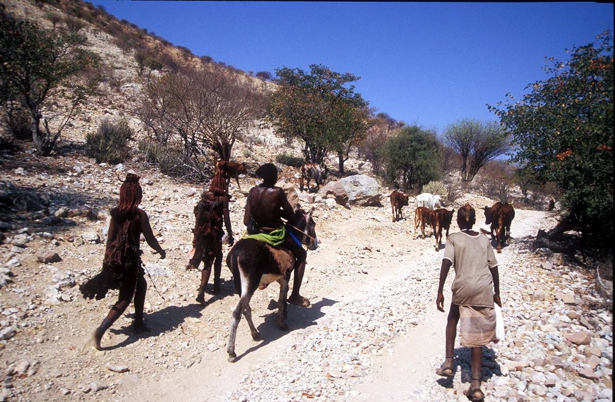 Namibia familia himba con el ganado por los caminos del norte del pais