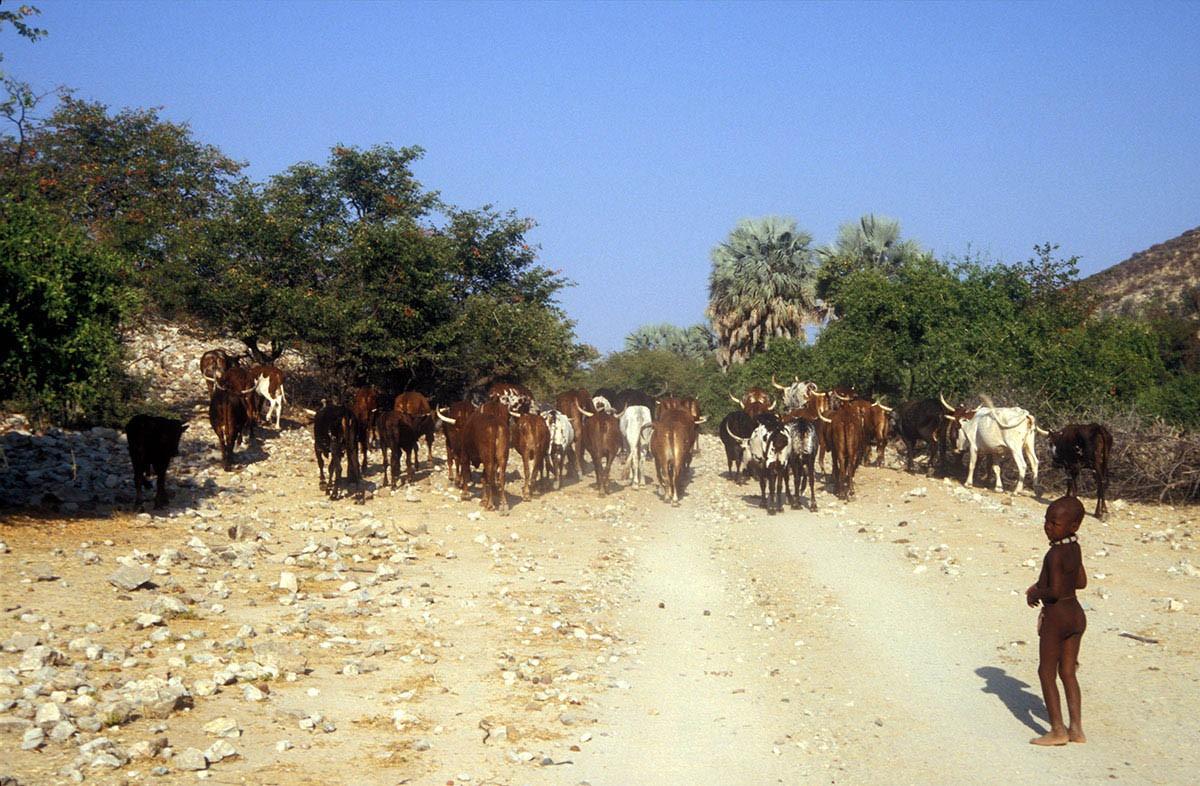 Namibia niño junto al ganado en el camino