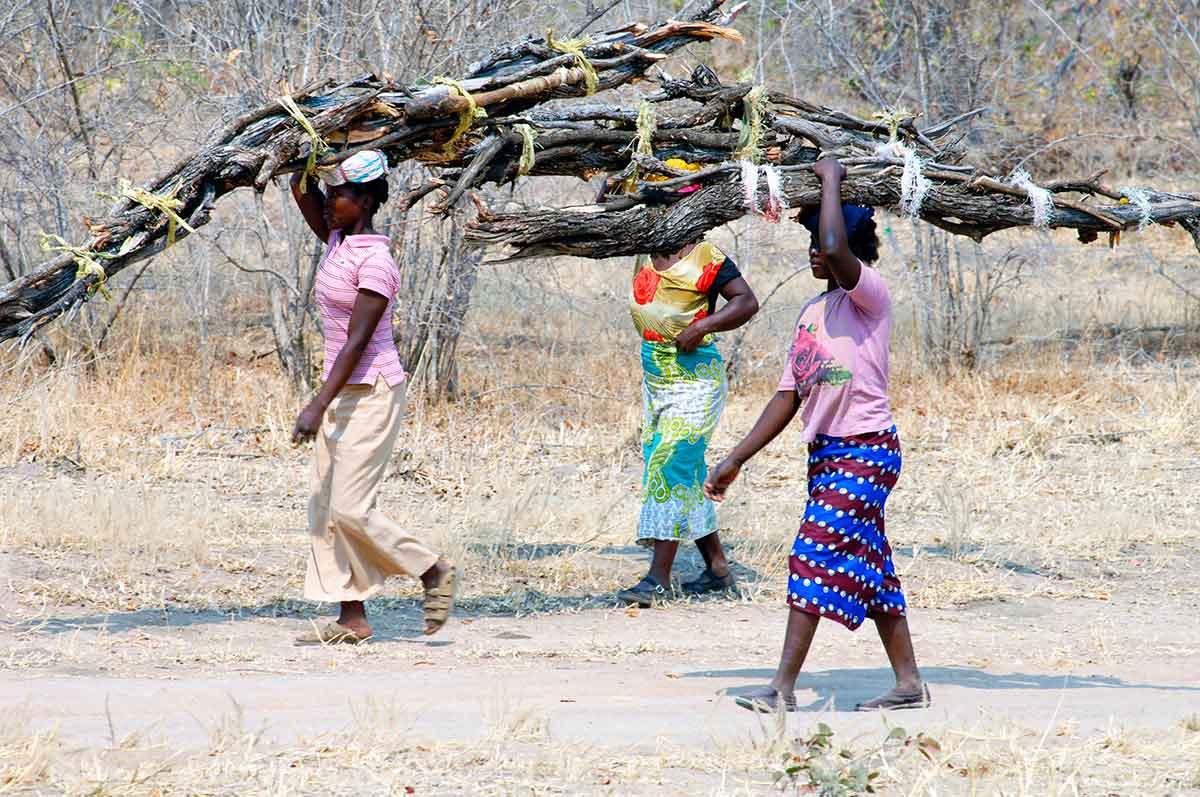 Mujeres cargadas con fardos de troncos sobre la cabeza